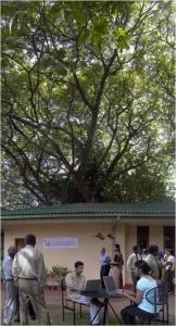 mara tree lirneasia office opening